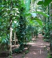 Nature's Retreat: Exotic Goa Monsoon Tour Package