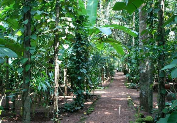 Visit the enchanting Spice Plantations on your Goa holiday.