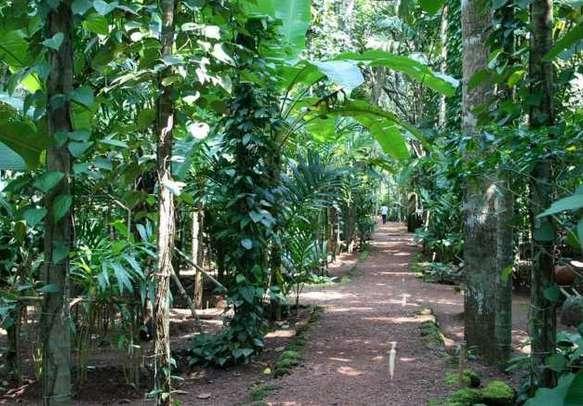 Visit spice plantations on your offbeat Goa tour.
