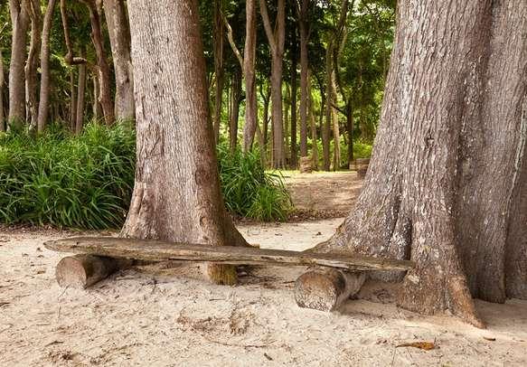 A rest bench made of driftwood at Radhanagar Beach in Andaman.