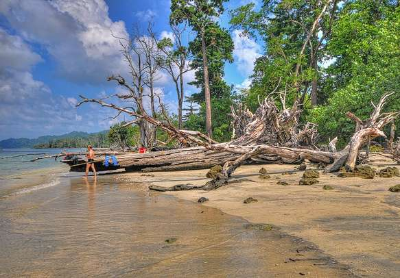 Fallen trees and driftwood at Havelock Island in Andaman