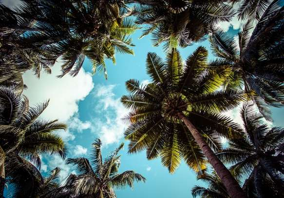 Coconut trees against blue sky in Andaman