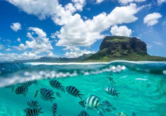 Underwater Marine Life.