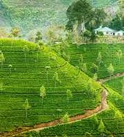 Enticing Sri Lanka Honeymoon Package From Hyderabad