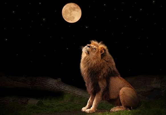 Experience the thrilling Night Safari tour