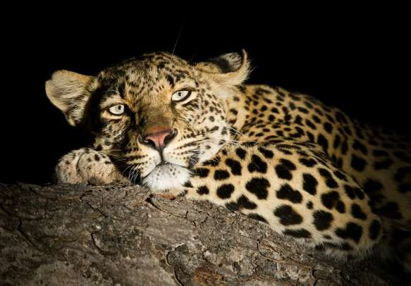 Gel with the wild in Night Safari