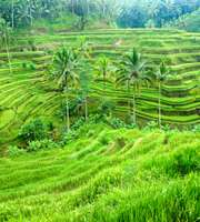 Bali Tour Package From Coimbatore