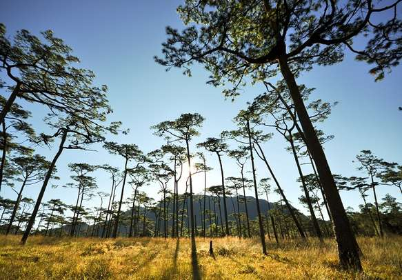 Tall trees and beautiful surroundings make Shimla a beautiful hill station in Himachal