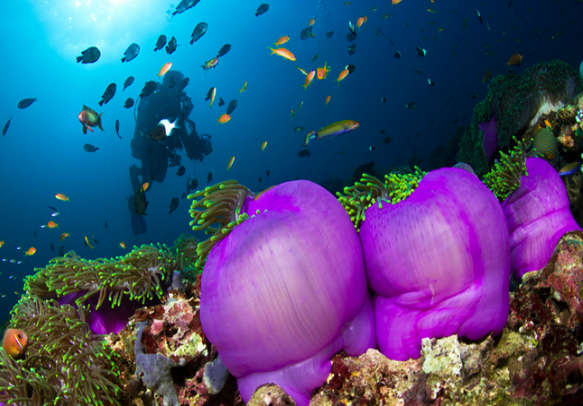 Dive in to the crystal clear waters of Maldives and delve into the  marine life