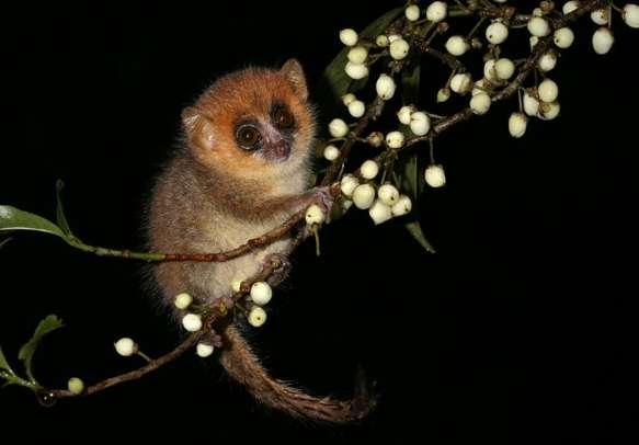 Watch wild animals in their natural habitat at night in Singapore