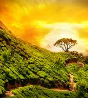 Exotic Munnar Thekkady Alleppey Honeymoon Package