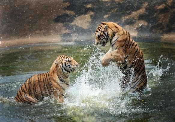 Watch animals in their natural habitat in Thekkady