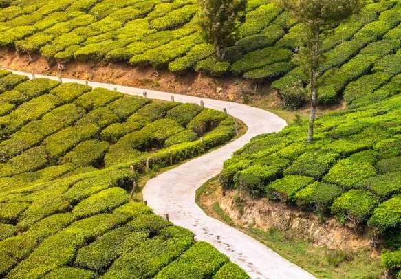 Snaking road with lush vegetation around