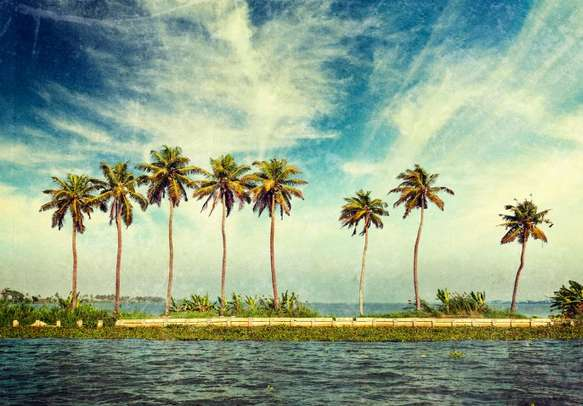 Spectacular palm fringed backwaters of Alleppey
