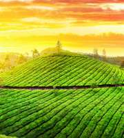 Panoramic Munnar Honeymoon Package With Kumarakom Houseboat