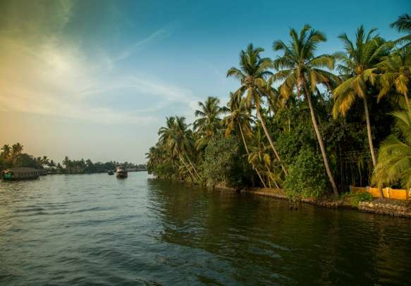 Coconut trees and sunset sky at the backwaters of Alleppey