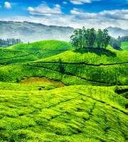 Charming Munnar-Kovalam Honeymoon Tour