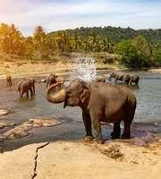Stunning Sri Lanka Honeymoon Package From Kolkata