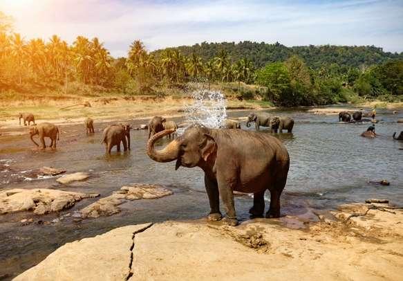 Visit Pinnawala Elephant Orphanage in Kandy