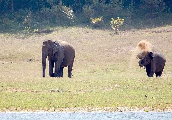 Elephants roaming around in Periyar National Park