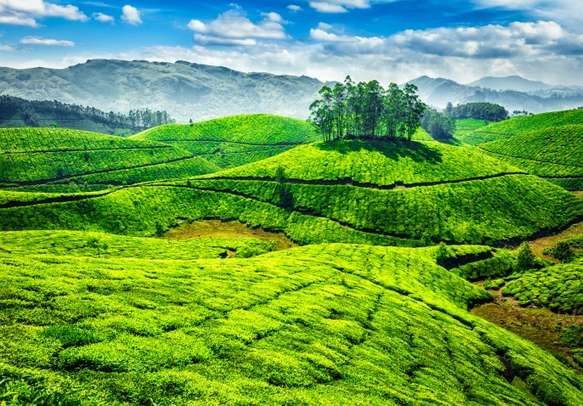 The tea planations of Munnar are a treat to watch