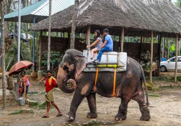 Enjoy an elephant ride in Thekkady