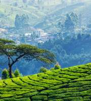 Remarkable Kerala Honeymoon Package From Pune