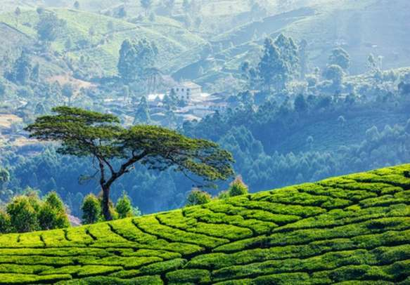 The captivating charm of Munnar