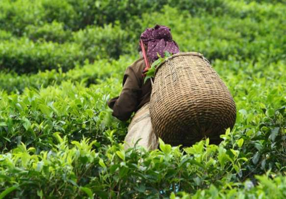 Kerala is a paradise for nature lovers