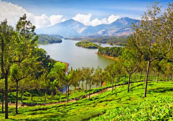 The soothing tea slopes of Munnar
