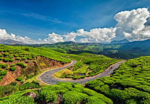 Stroll around the charming tea plantations in Munnar on Kerala holiday package.