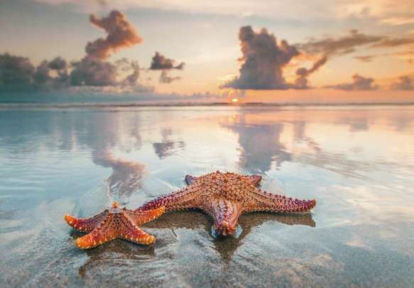 Marvel at the magnificent marine life and coral reefs when scuba diving in Nusa Dua