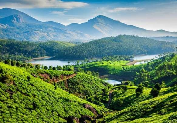 Explore the Munnar tea plantations on this honeymoon tour of Kerala.