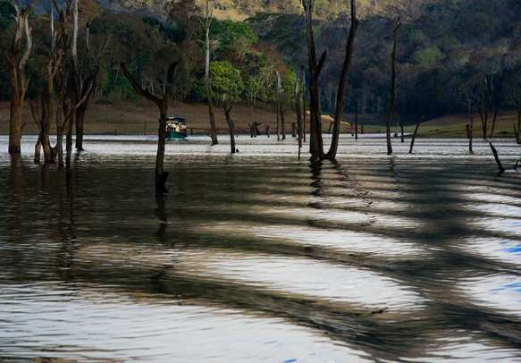 View the beauty of nature in Thekkady on a fun holiday tour.