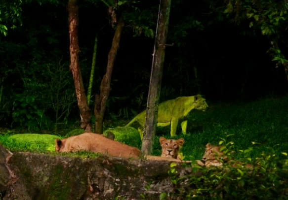 Visit the world's first nocturnal zoo with your partner.