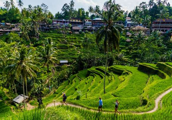 Amazing view of lush green rice terraces in Ubud