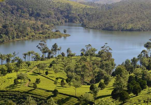 Enjoy a languorous cruise through the Periyar river on your Kerala honeymoon.