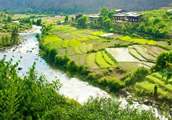 Surrender yourself to the soothing beauty of Paro Valley