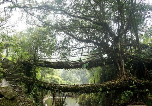 A view of Double-decker Root Bridge in Mawlynnong