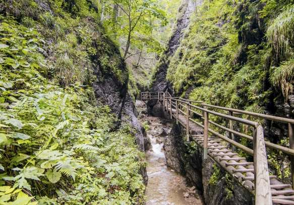 The luxuriant forest of Meghalaya