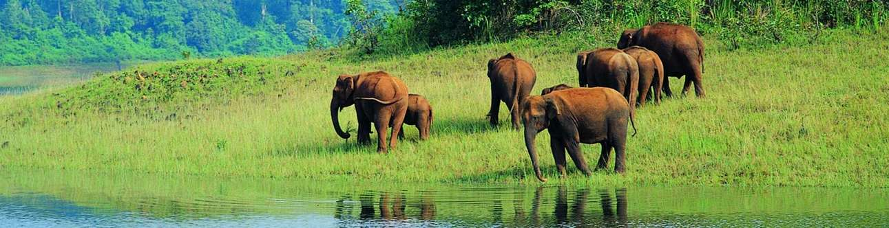 Witness the beauty of flora and fauna at Periyar Wildlife Sanctuary in Thekkady