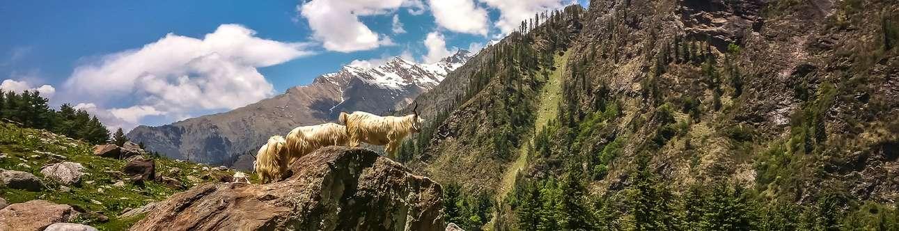The beautiful Kheerganga trek