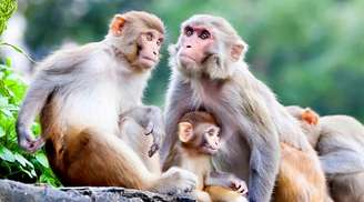 Witness adorable monkeys hopping about at Monkey Point