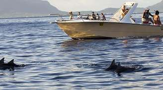 Enjoy your dolphin cruise at Goa