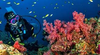 Take a look at the under water world