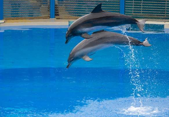 Watch the amazing antics of dolphins at the Ocean Park