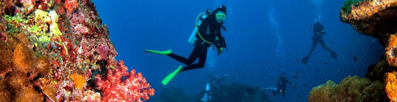Explore the wondrous undersea world