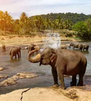 Sri Lanka Family Vacation: Wildlife & Beaches