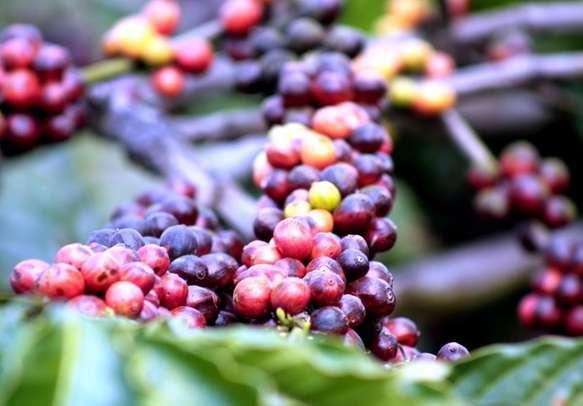 Magnetizing fresh coffee beans aroma