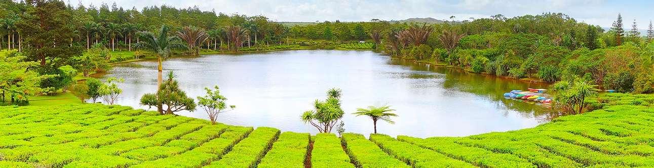 Visit the tea plantations of Mauritius